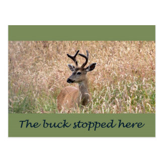 The Buck Stopped Here (2) Postcard