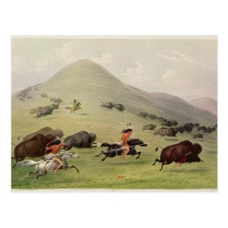The Buffalo Hunt, c.1832 Postcard