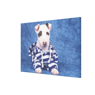 The Bull Terrier is a breed of dog in the Canvas Print