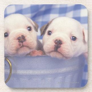 The Bulldog, often called the English Bulldog, Coasters