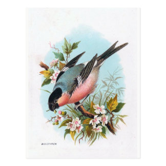"""The Bullfinch"" Postcard"