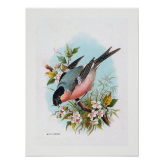 """The Bullfinch"" Poster"