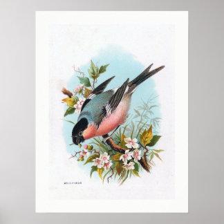 """The Bullfinch"" Print"