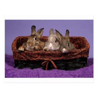 The Bunny Family Postcard