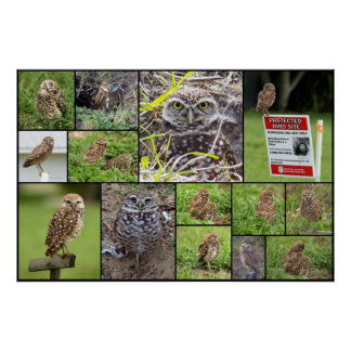 The Burrowing Owls Collage Poster
