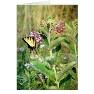 The Butterfly and Milkweed Card