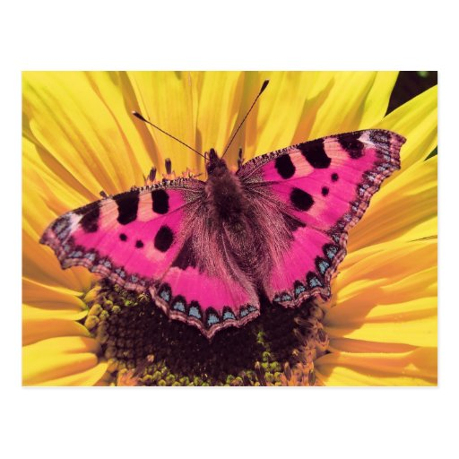The Butterfly is a Flying Flower Post Cards
