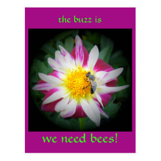 the buzz on bees postcard