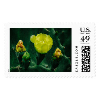 The Cactus Bloom Postage Stamp