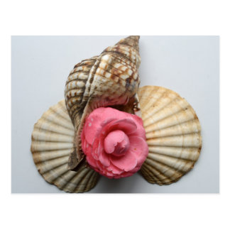 The Camellia And The Shells Postcard