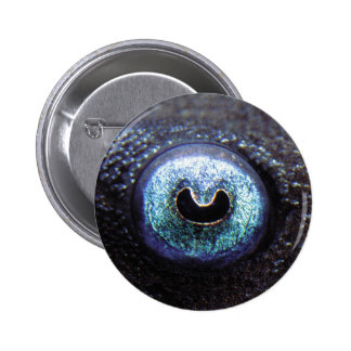 The can badge of Blue Eye Pleco