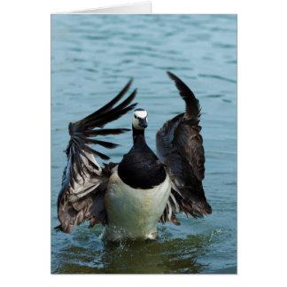 The Canada Goose Branta Canadensis Cards