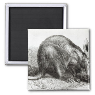 The Cape Ant-Eater Magnets