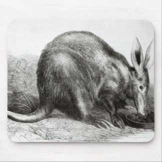 The Cape Ant-Eater Mouse Pad