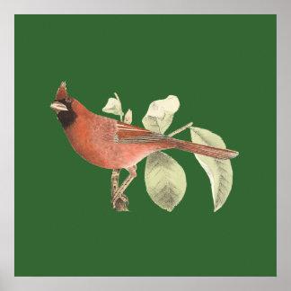 The Cardinal Grosbeak(Pitylus cardinalis) Poster