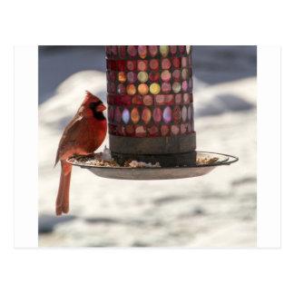 The Cardinal Postcard