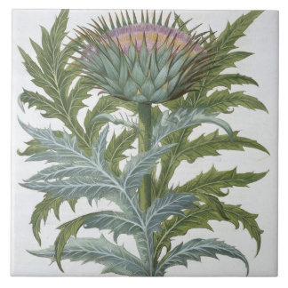 The Cardoon, from the 'Hortus Eystettensis' by Bas Ceramic Tile
