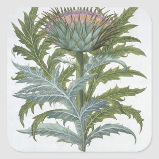 The Cardoon, from the 'Hortus Eystettensis' by Bas Square Sticker