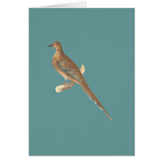The Carolina Turtle Dove(Ectopistes carolinensis) Greeting Card