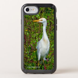 The Case of the Cattle Egret