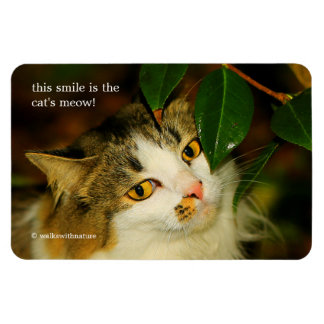 The Cat and the Camellia Magnet