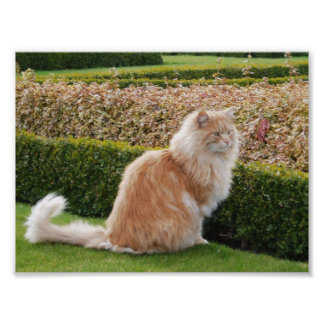 The Cat At Wimpole Hall Cambs Posters