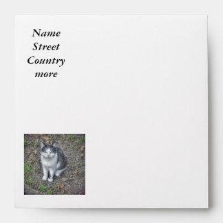 the cat envelopes