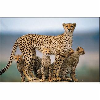 The cat family! statuette