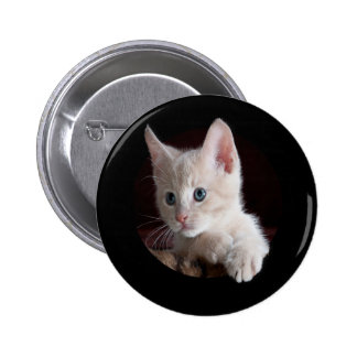 the cat funny button