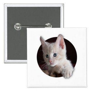 the cat funny pinback button