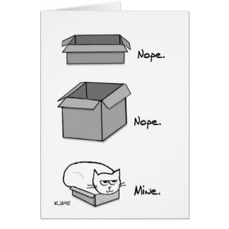 The Cat Totally Fits in this Box - Funny Cat Car Card