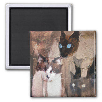 The Cats 2 Inch Square Magnet