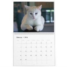 The Cats Calendar at Zazzle