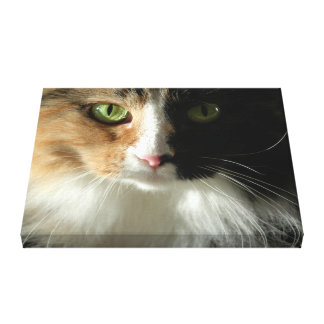 The Cat's Eyes Gallery Wrapped Canvas