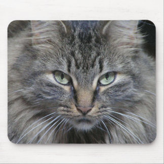 The Cats Eyes Have It Mouse Pad