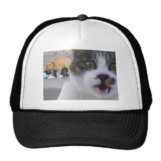 The cats little secret trucker hat