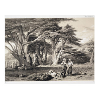 The Cedars of Lebanon, engraved by Freeman (sepia Postcard