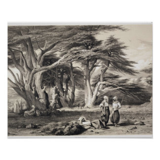 The Cedars of Lebanon, engraved by Freeman (sepia Poster
