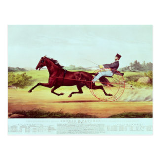 The Celebrated Horse, George M. Patchen Postcard