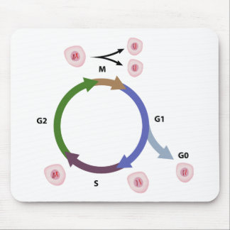 The cell cycle mousepad