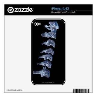 The Cervical Vertebrae 6 Decals For iPhone 4S