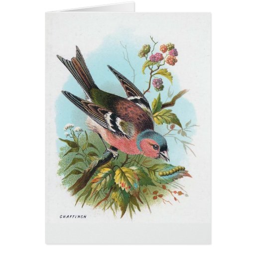 The Chaffinch Card