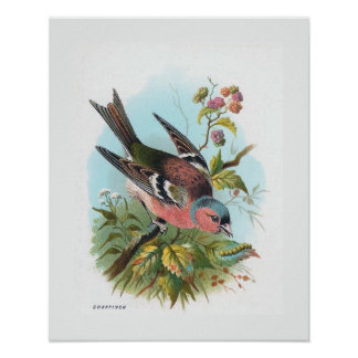 """""""The Chaffinch"""" Posters"""