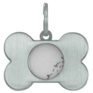 The chain of ants close-up pet ID tag