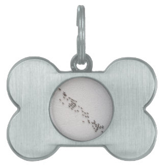 The chain of ants closeup pet name tag