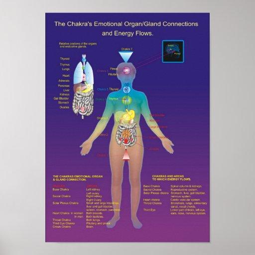 The Chakra Organ / Gland and Energy Flow Print