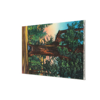 The Chandelier Tree, Underwood Park Canvas Print