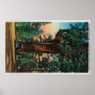 The Chandelier Tree, Underwood Park Poster