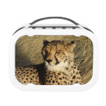 The Cheetah Yubo Lunch Boxes