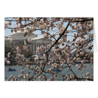 The Cherry Blossoms In Bloom In Washington DC Card